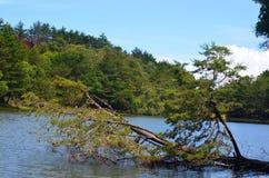 lago e foresta, Costa Rica Immagini Stock Libere da Diritti