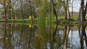 Lago e foresta Luznica archivi video
