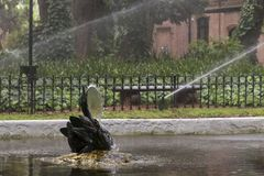 Lago e giardino in mezzo di Buenos Aires Immagine Stock Libera da Diritti