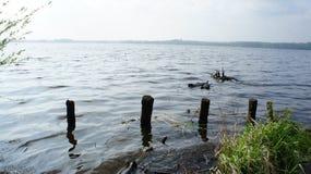 Lago e hierba Imágenes de archivo libres de regalías