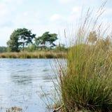 Lago e hierba en el brezo de Kalmthout, Europa Fotos de archivo libres de regalías