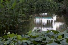Lago e jardim entre Buenos Aires Imagem de Stock Royalty Free