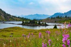 Lago e montagne alpini nei prati del sole, Alberta Immagini Stock