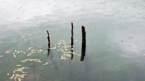 Lago e pioggia video d archivio