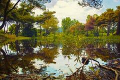 Lago e plantas Imagens de Stock