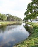 Lago e Treeline Imagem de Stock Royalty Free