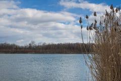 Lago e una canna Fotografia Stock