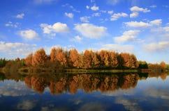 Lago ed alberi Fotografia Stock