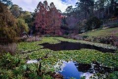 Lago ed alberi alti botanic Gardens del supporto Immagine Stock Libera da Diritti
