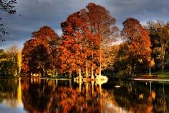 Lago ed alberi in autunno Immagini Stock Libere da Diritti
