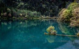 Lago ed alberi nella valle del Jiuzhaigou, Sichuan, Cina immagini stock libere da diritti