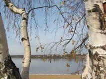 Lago ed albero Immagine Stock
