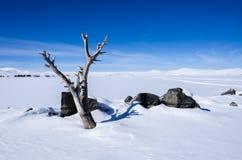 Lago ed albero congelati fotografia stock