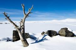Lago ed albero congelati immagine stock libera da diritti