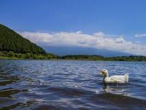 Lago ed anatra ad ovest Fotografia Stock