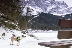 Lago Eibsee en invierno con el perro Imagen de archivo libre de regalías