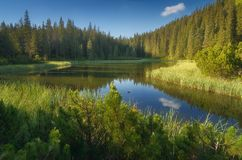 Lago em montanhas Carpathian de uma floresta da montanha Fotografia de Stock Royalty Free