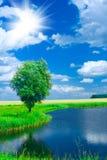 Lago em um campo Imagens de Stock