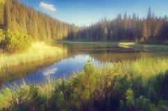 Lago em uma floresta da montanha Imagens de Stock