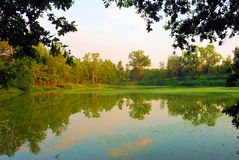 Lago en bosque imágenes de archivo libres de regalías