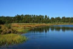 Lago en bosque conífero en los llanos fotos de archivo libres de regalías