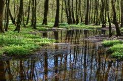 Lago en bosque de la primavera fotos de archivo