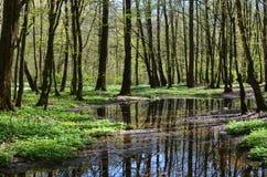 Lago en bosque de la primavera imágenes de archivo libres de regalías