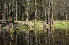 Lago en bosque de la primavera imagenes de archivo