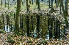 Lago en bosque denso Imagen de archivo libre de regalías