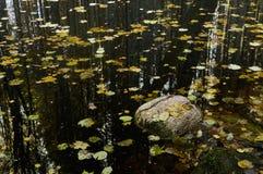 Lago en bosque denso Fotos de archivo libres de regalías