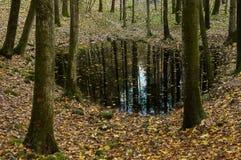 Lago en bosque denso Fotografía de archivo libre de regalías
