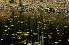 Lago en bosque denso Foto de archivo libre de regalías