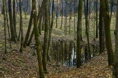 Lago en bosque denso Imágenes de archivo libres de regalías