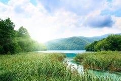 Lago en bosque profundo imagen de archivo