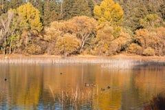 Lago en caída fotografía de archivo libre de regalías
