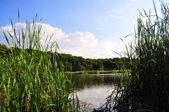 Lago en campo Foto de archivo
