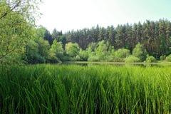 Lago en el bosque Fotografía de archivo libre de regalías