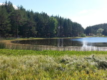 Lago en el bosque Fotos de archivo