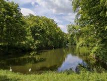 Lago en el bosque Imagen de archivo