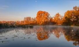 Lago en el bosque del otoño, niebla sobre el lago, otoño, árboles sobre el lago fotos de archivo libres de regalías