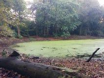 Lago en el centro del Forrest Foto de archivo