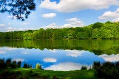 Lago en el parque con el bosque en el otro orilla, cielo azul del claro y nubes blancas mullidas Fotos de archivo libres de regalías