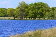 Lago en el parque de Richmond en Londres fotos de archivo libres de regalías