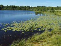 Lago en el verano Imagen de archivo
