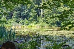 Lago en foto caliente del verano del bosque foto de archivo
