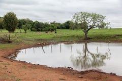 Lago en granja fotos de archivo