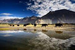 Lago en Himalaya Imagenes de archivo