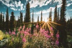 Lago en la cumbre de la reflexión de la puesta del sol de Revelstoke del soporte sunstar a través de bosque con el cielo azul y l Imágenes de archivo libres de regalías