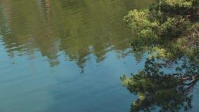 Lago en la mina de piedra con las orillas rocosas El lago hermoso riela debajo del sol, árbol verde está cerca almacen de metraje de vídeo