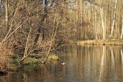 Lago en las maderas Imagen de archivo libre de regalías